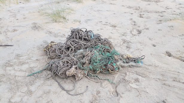 Fishing Nets found in Sperm Whale